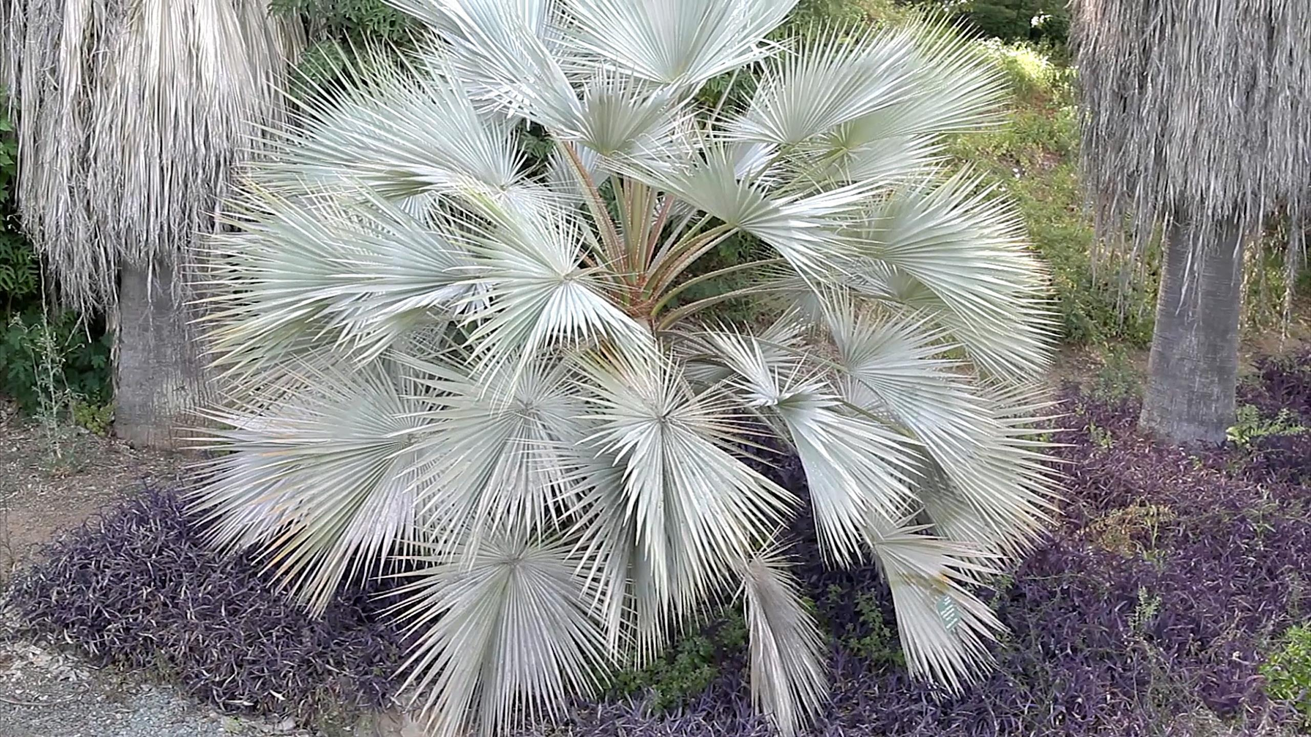 jardín botánico málaga